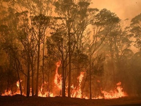 Les incendies en Australie aggravent la situation de plus de 100 espèces d'animaux déjà menacées