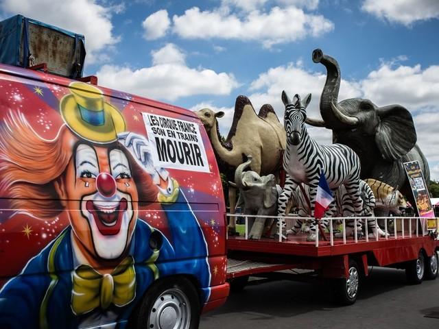 Les cirques avec des animaux sauvages interdits à Paris dès 2020