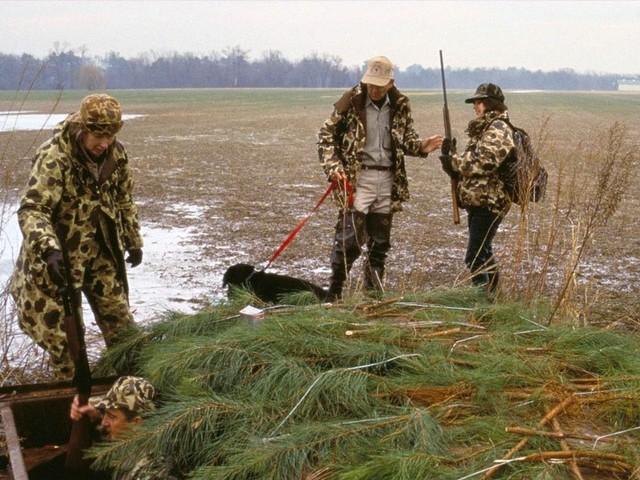 Il ne dégrade pas que la nature : le plomb utilisé par les chasseurs nuit gravement à votre santé