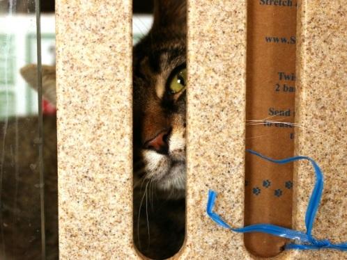 Félins sous contrat, quand des chats montent la garde