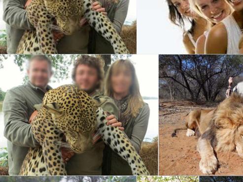 Léopard, antilope, lion, ... Deux gérants de supermarchés perdent leur emploi après avoir posté des photos de leur safari de chasse (vidéo)