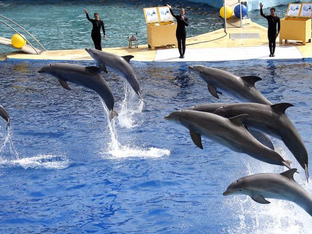 L'interdiction de la reproduction des dauphins en captivité annulée par le Conseil d'État