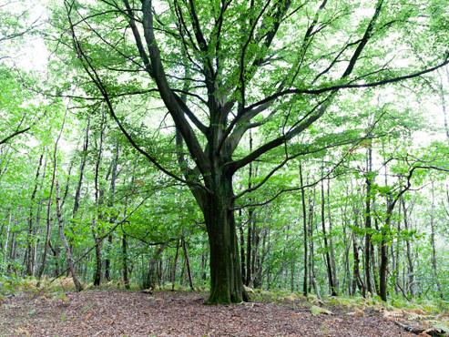"""Le """"pari fou"""" de David et 4 amis pour sauver Le Grand Bois d'Hennuyères: """"Au début, on était 5, aujourd'hui, 900... C'est magique"""""""
