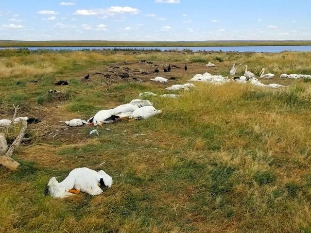 Etats-Unis: plus de 11 000 oiseaux tués par une tempête de grêle