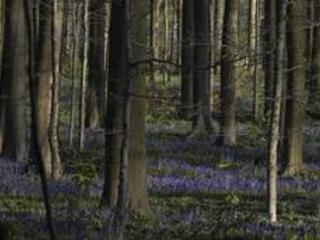 Des forêts privées wallonnes pour la première fois certifiées FSC