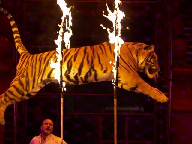 Enfin ! La Ville de Paris va bientôt décider du sort des animaux sauvages dans les cirques