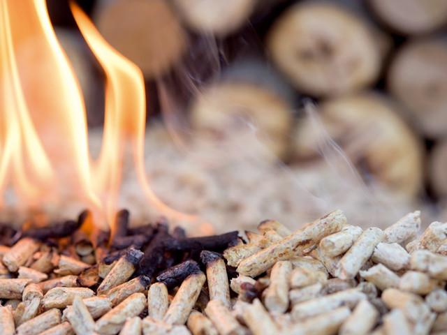 Energies vertes : la biomasse toujours sous-estimée