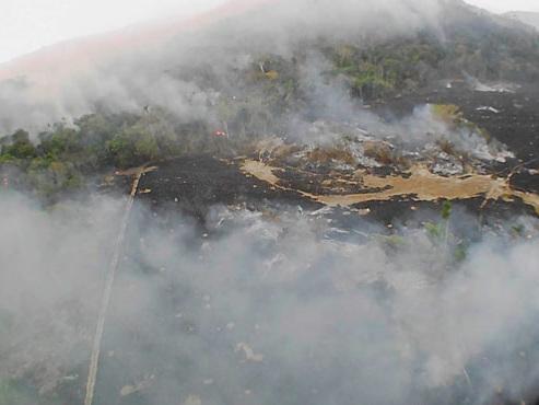 Feux en Amazonie: 5 choses à savoir sur la plus vaste forêt tropicale de la planète