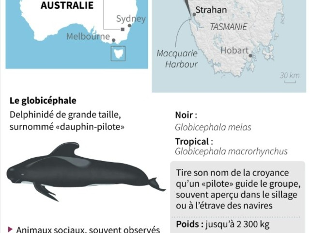 """L'espoir de sauver d'autres """"dauphins-pilotes"""" s'amenuise en baie de Tasmanie"""