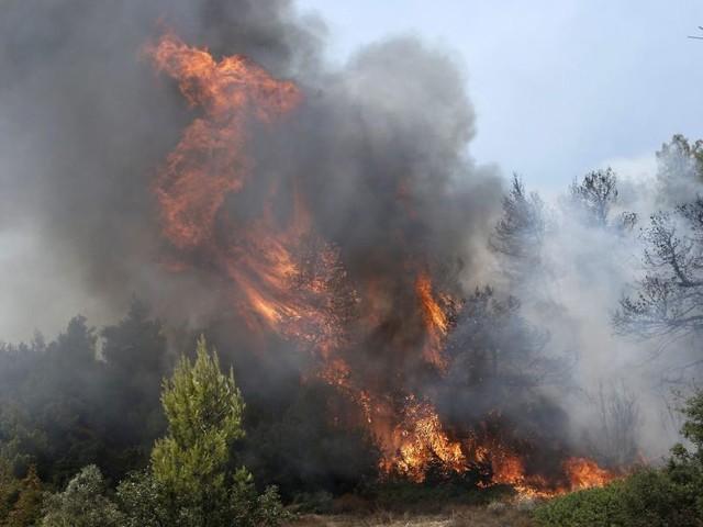 Grèce: «Catastrophe écologique» sur l'île d'Eubée ravagée par les flammes (photos)