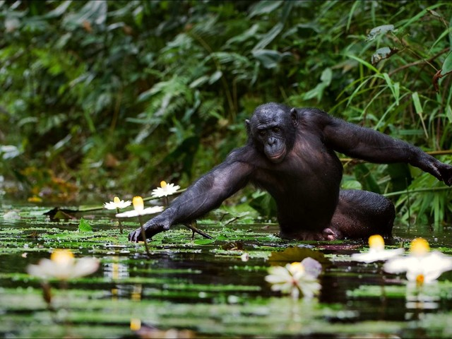 Afrique : plus d'un tiers de la flore tropicale est menacé d'extinction