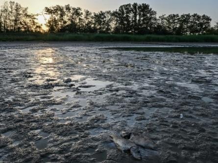 Les poissons des étangs de la Dombes étouffent dans une eau à plus de 30°