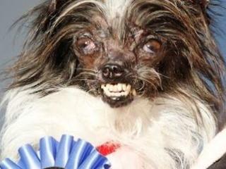 Le chien le plus moche du monde : une décennie de lauréats