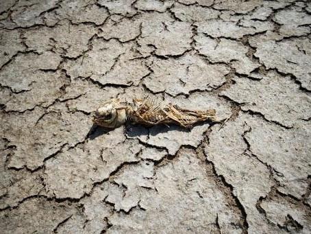 La Coalition Climat donne 100 jours à la Belgique pour réagir à l'urgence climatique