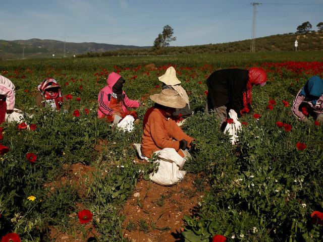 La Tunisie célèbre la journée internationale de la femme rurale. Quels enjeux?