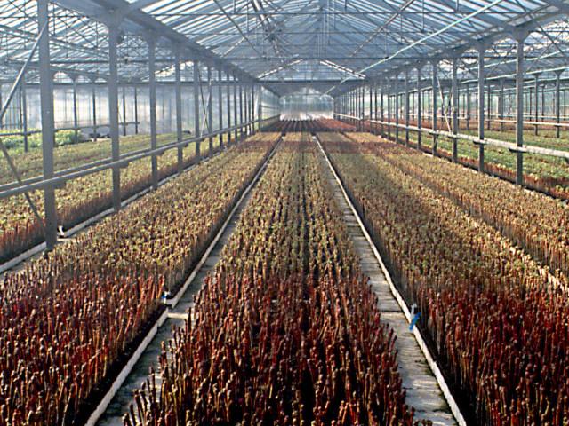 """""""C'est de la concurrence déloyale"""" : pépiniéristes et horticulteurs désemparés face à l'ouverture des grandes surfaces"""