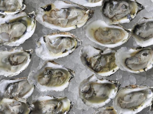 Les huîtres souffrent de plus en plus du réchauffement climatique