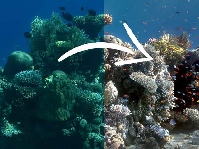 Cet algorithme retire l'eau des photos sous-marines
