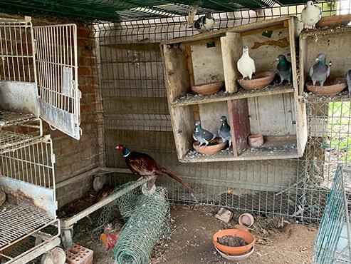 Lessines: plus de 70 animaux détenus dans des conditions déplorables ont été sauvés (photos)