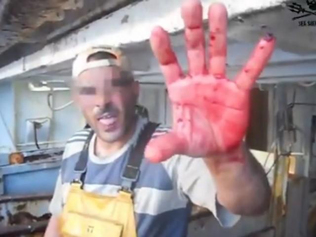 Sea Shepherd alerte sur la consommation de dauphins protégés en France
