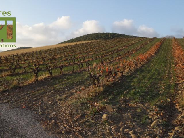 """WEBDOC - Aude et P.-O. : ces audois et catalans qui font l'agriculture de demain, retour sur la série """"Terres d'innovations"""""""