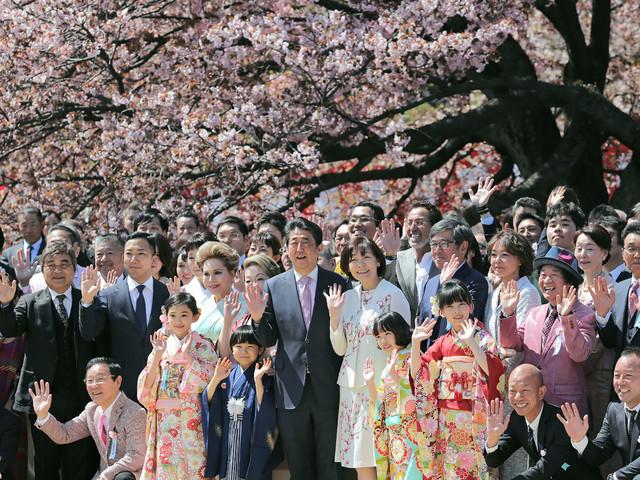 Japon: comment des cerisiers en fleurs ont bourgeonné en scandale politique