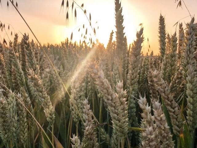 Sécheresse: la pluie manque dans plusieurs régions, les agriculteurs s'inquiètent