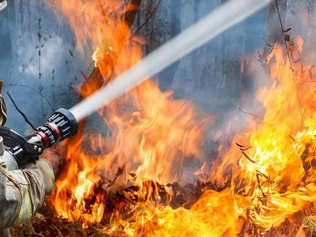 Incendie dans le Var : le plus gros feu de forêt de l'été en France