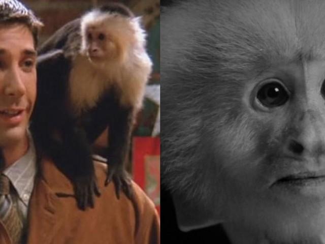 Le petit singe du court-métrage de David Lynch n'est autre que Marcel de Friends !