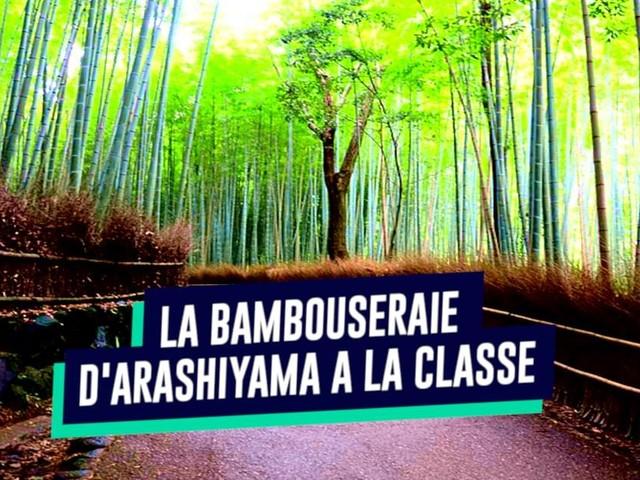 Top 10 des plus belles bambouseraies du monde, bambou dans tes silences se dessinent