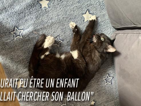 Othmane a vu son chat, Luc, se faire renverser sous ses yeux à Ixelles: peut-il porter plainte grâce au numéro de plaque?