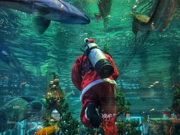 Montpellier : la magie de Noël s'invite à Planet Ocean