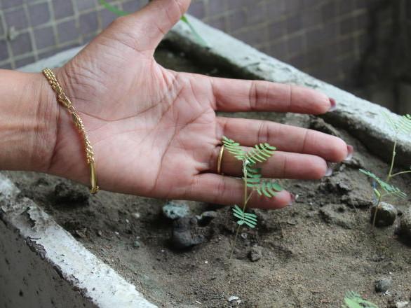 La Côte d'Ivoire compte célébrer la paix en plantant des arbres