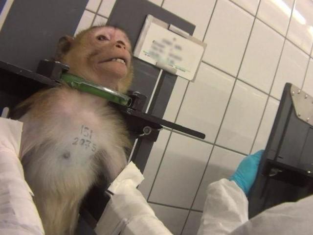 Une vidéo qui fait froid dans le dos: elle a été tournée dans un laboratoire d'expérimentation pharmaceutique qui teste des produits sur des animaux