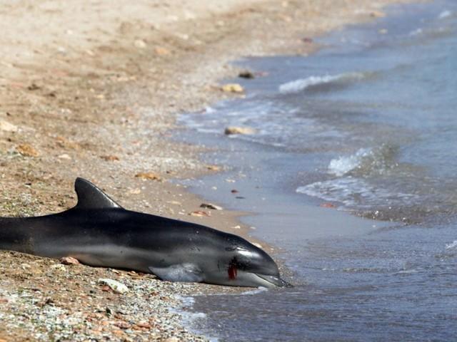 34 cétacés sont morts mystérieusement depuis le début de l'année près des côtes toscanes
