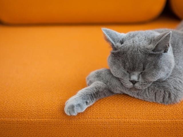 Comment enlever des poils de chat ou de chien?