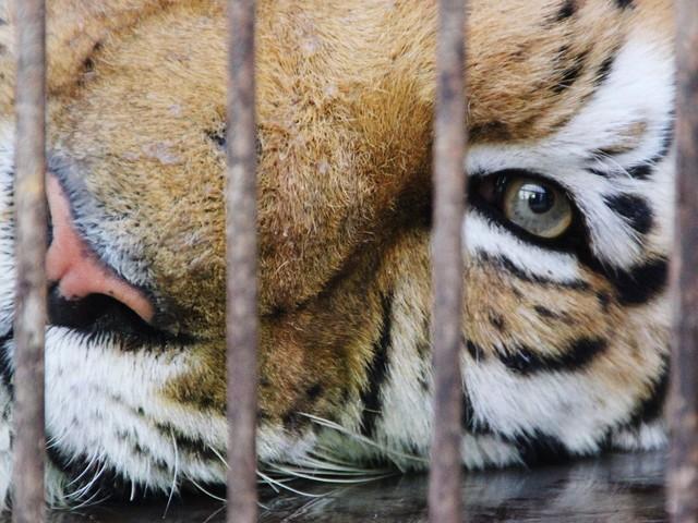 La fin progressive des animaux sauvages dans les cirques est un pas de géant dans la bonne direction - BLOG