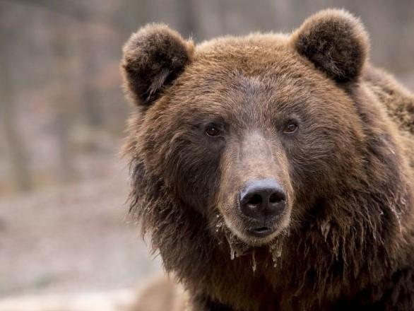 Un aventurier français tué par un grizzly dans le nord canadien