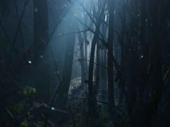 N'écoutez pas ça avant de dormir! Ils captent un son effrayant dans une forêt au Canada