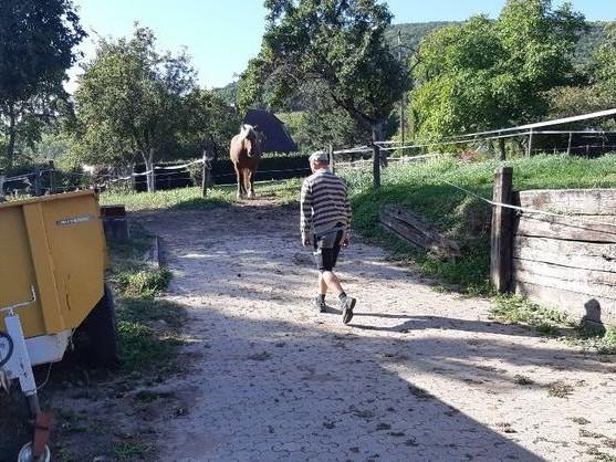 Le cheval Sésame va devoir changer de parcelle parce que son odeur incommode les voisins