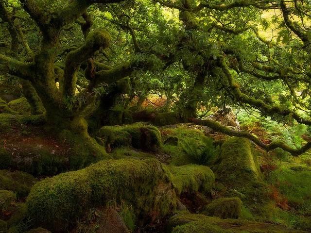 9 forêts qui vous donneront envie de communier avec la nature