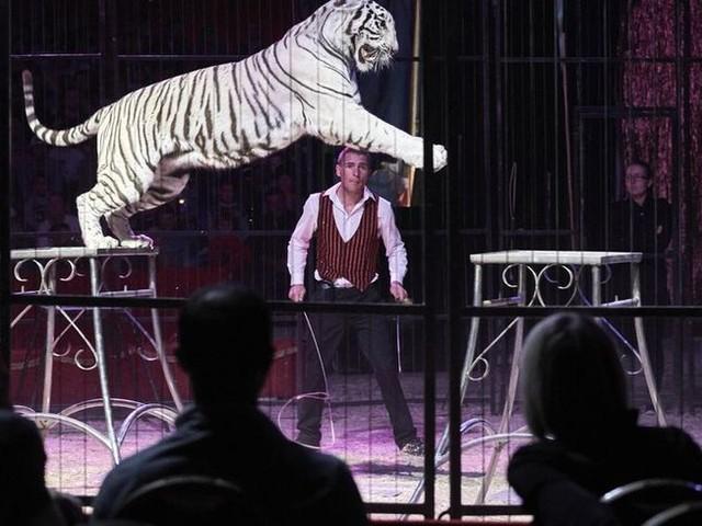 En Mayenne, une pétition pour interdire l'installation de cirques avec animaux sauvages fait polémique