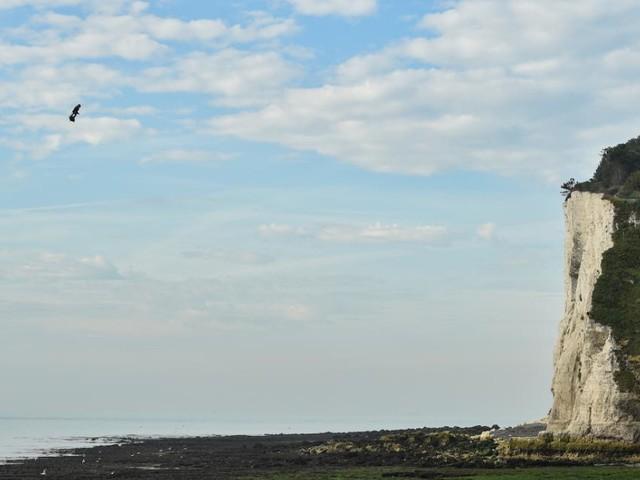 EN DIRECT - Franky Zapata, l'homme volant a réussi à traverser la Manche : les images de son exploit