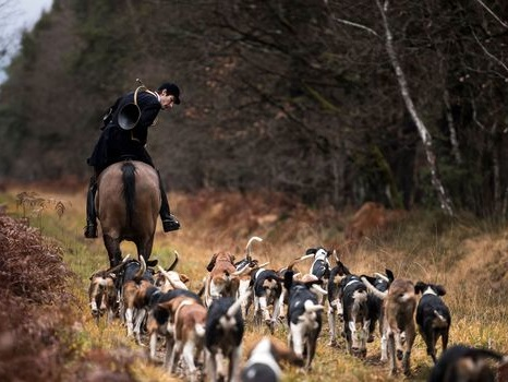 Femme tuée par des chiens : coupable idéal, le monde de la chasse à courre se défend