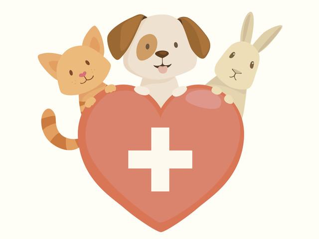 Assurance Animaux Chien et Chat : Comparateur Gratuit - Hyperassur