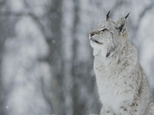 National Geographic Wild: Direction la Scandinavie à partir du 14 septembre