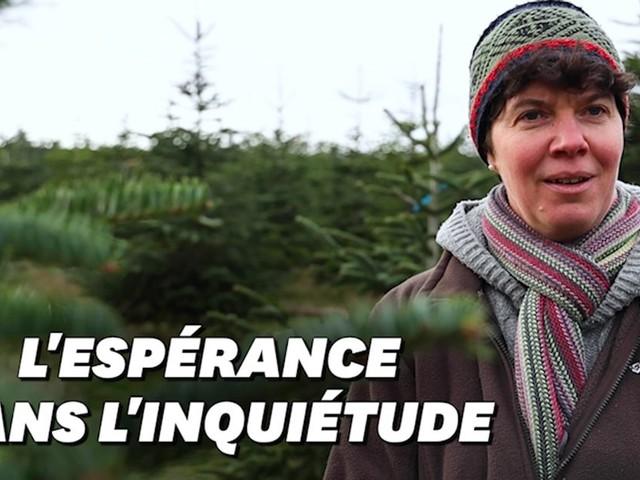 Noël et Covid-19: Comment cette productrice de sapins fait face à la crise sanitaire et écologique