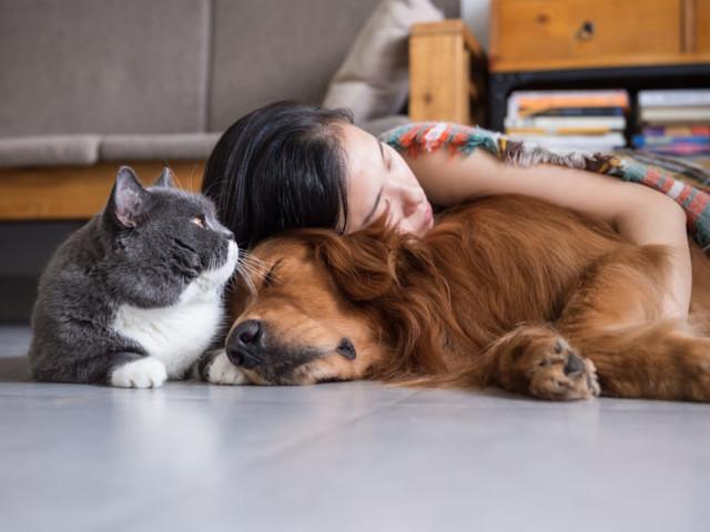 Assurance chiens et chats : comment protéger ses animaux ?