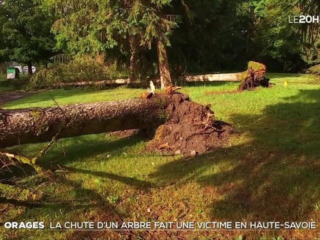 Intempéries : une chute d'arbre fait une victime à Taninges