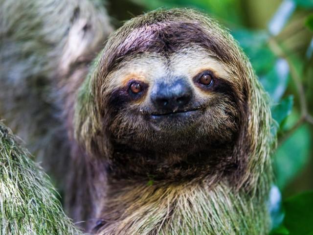 À la découverte des paresseux : 8 faits fascinants sur l'animal